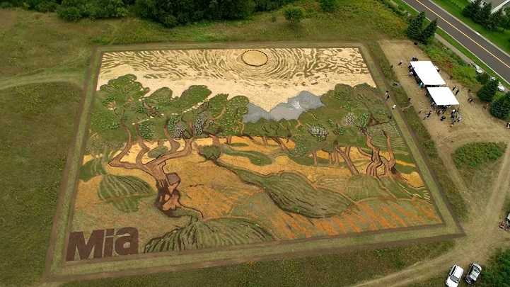 """Dokončený vysadený obraz """"Olivovníky"""" na poli v"""