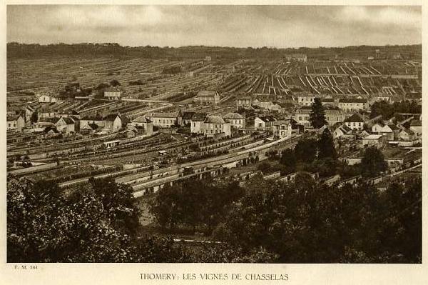 Vinice v Thomery