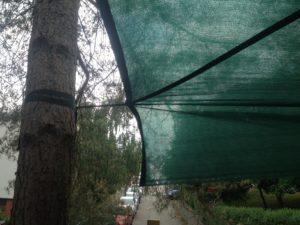 Pripevnenie tieniacej plachty k stromu pomocou popruhu