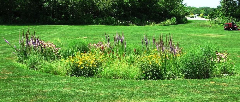 Klasická dažďová záhrada